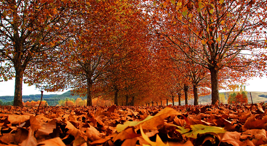 SP A12 - Autumn Leaves