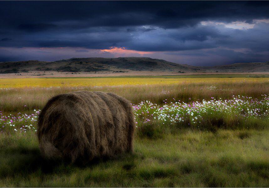03 Hooi Baal tussen Kosmos - Landscapes - Francois v Jaarsveld